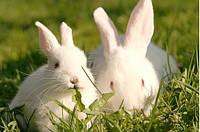 Для откорма кролей (травяная мука 41%) от 2 до 4 месяцев