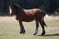 Для выращивания и нагула молодняка мясных лошадей