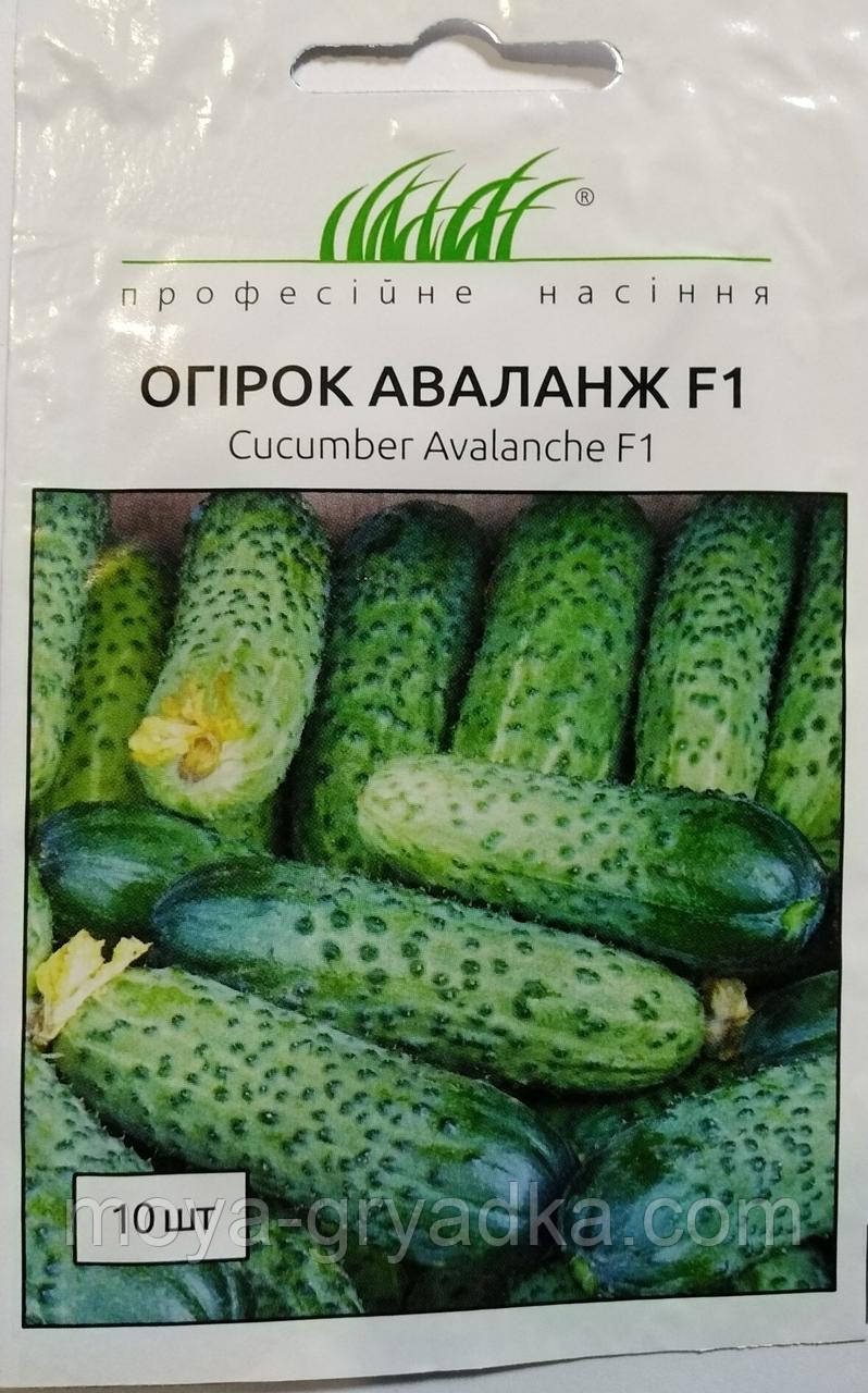"""Насіння огірка Аваланж F1  10 нас ТМ""""Професійне насіння"""""""
