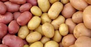 Насіннєва картопля. Голландія.
