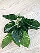 Искусственный,декоративный куст-филодендрон ( латекс 40 см), фото 5