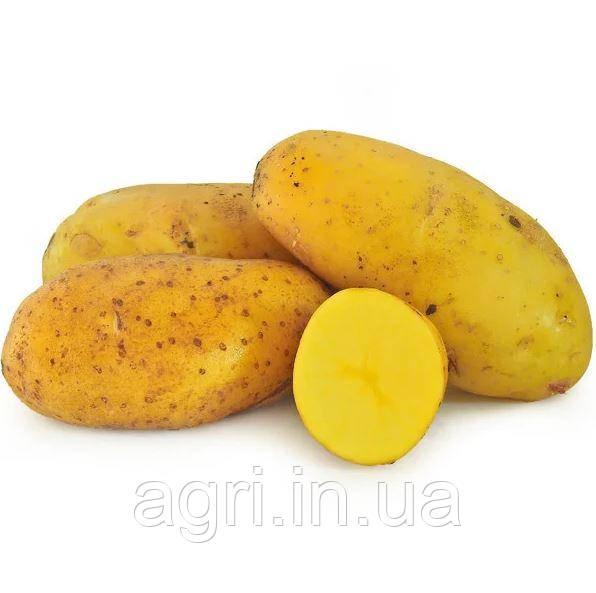 Насіннєва картопля Гранада (Голландія)