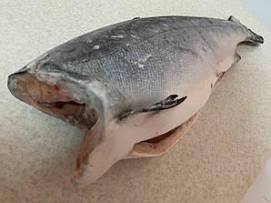 Рыба красная кижуч дикий лосось