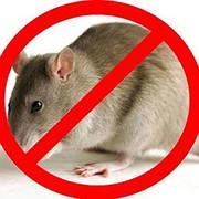 Родентициды от крыс