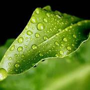Прилипатели для опрыскивания растений