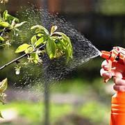 Инсектициды от вредителей