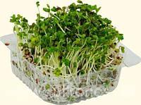 Весовые семена  редиса Джолли на микрозелень