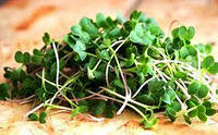 Семена Редиса Рубин   на микрозелень