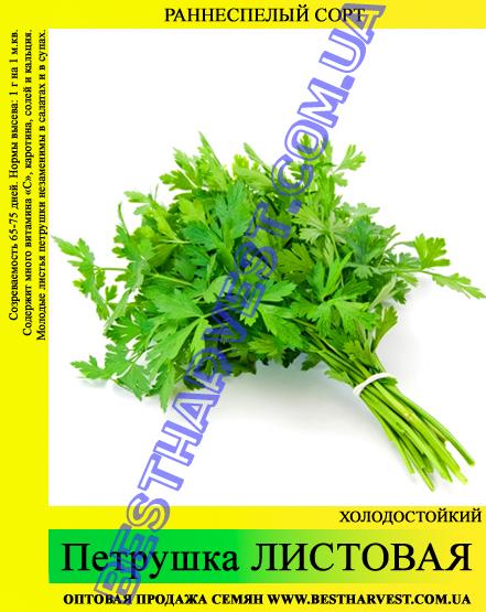 Семена петрушки «Листовая» 0.5 кг