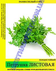 Семена петрушки «Листовая» 25 кг (мешок)