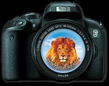 Магнит-фотоапарат.  Рівненський зоопарк