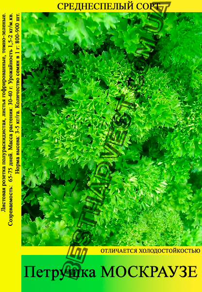 Семена петрушки «Москраузе» 0.5 кг