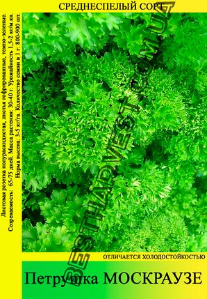 Семена петрушки «Москраузе» 0.5 кг, фото 2