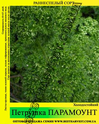 Семена петрушки «Парамоунт» 10 кг (мешок), фото 2