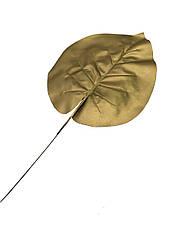 Листья калатеи золотой