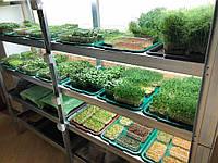 Вирощування мікрозелені підприємцями «Міні Ферма».