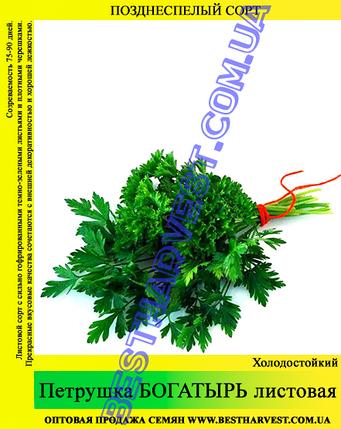 Семена петрушки «Богатырь» 0.5 кг, фото 2