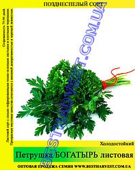 Семена петрушки «Богатырь» 25 кг (мешок)