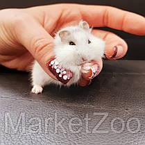 Карликовый джунгарский хомячек, фото 3