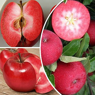 Саджанці Яблуні дерево сад (Трініті, Ера, Бая Маріса)