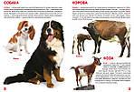 Большая книга. Домашние животные для любознательных мальчиков и девочек. Мир вокруг нас, фото 2