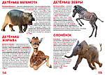 Большая книга. Детёныши животных для любознательных мальчиков и девочек. Мир вокруг, фото 3