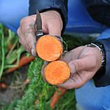 Семена моркови МИРАФЛОРЕС F1, 500.000 семян, фото 2
