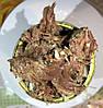 Тушенка говяжья кусковая Ладус-Йодис 525 г Украина, фото 9