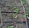 Крапельна стрічка щілинна Labyrinth 100м відстань крапельниць 20см., фото 6