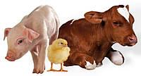 Лечение сельскохозяйственных животных