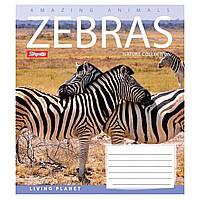 Зошит 24арк. кліт. 1В Lonely Planet Animals №763940(20)(320)
