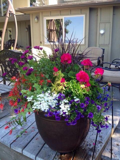 Вуличні квіти