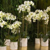 Композиции из искусственных орхидей