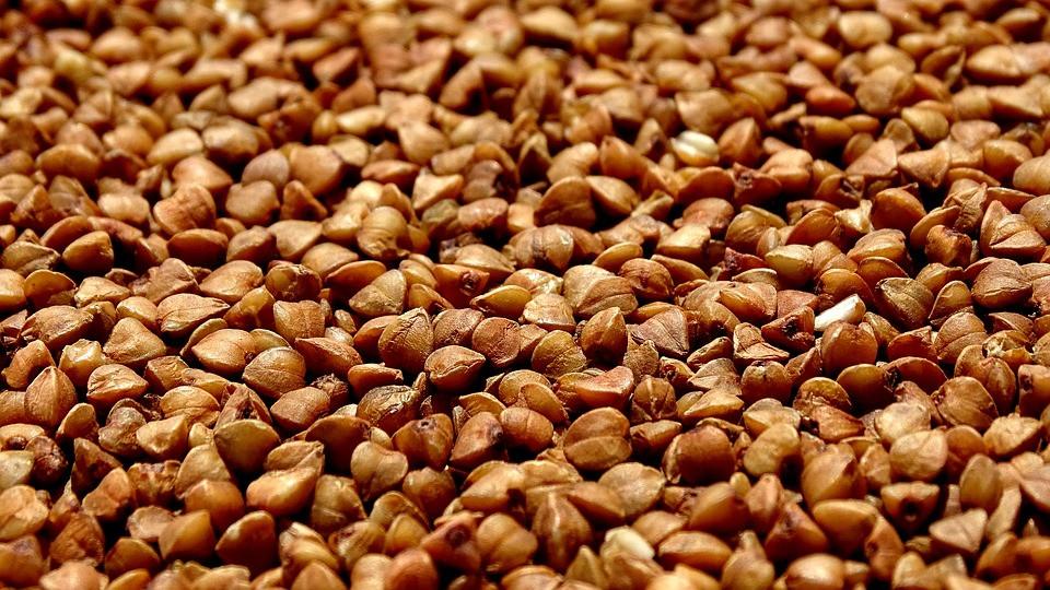 Семена гречихи гречки Юбилейная 100, Элита, 1 Репродукция