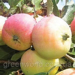 Саженцы яблони Пепинка Золотистая