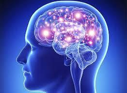 Робота мозку