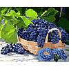 Набір для розпису Картина за номерами «Виноград у кошику» 40*50см.