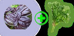 Семена пряностей весовые