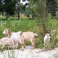 Электропастух Corral NA200 для коз (комплект на 500 м в 5 линий проводника)