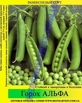 Семена гороха «Альфа» 1 кг, фото 2