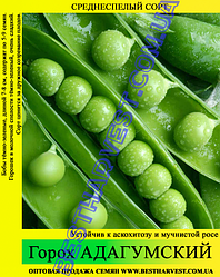 Семена гороха «Адагумский» 1 кг