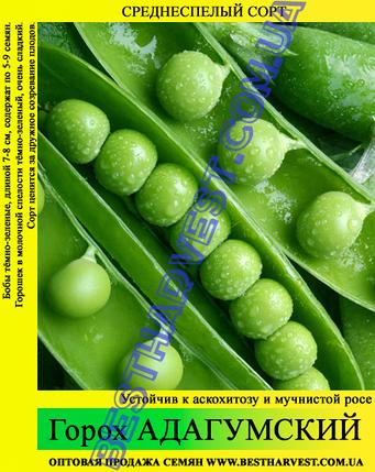 Семена гороха «Адагумский» 1 кг, фото 2