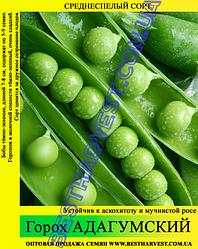Семена гороха «Адагумский» 25 кг (мешок)