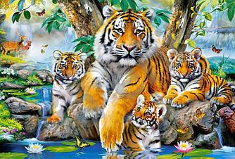 Пазлы Castorland 1000 элементов, 68х47 см, в коробке, Семья тигров у ручья