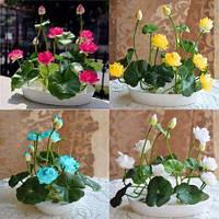 Семена Лотоса assorted экзотическое многолетнее растение, цветок бонсай