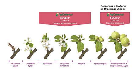 Беллис фунгицид, 8 г — для бережного хранения плодов, фото 2