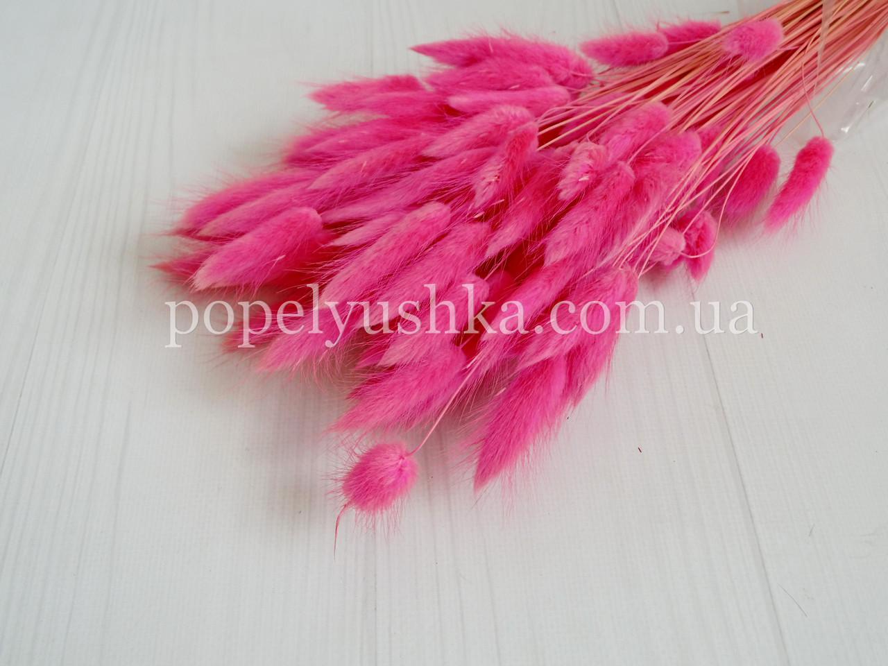 Лагурус натуральний яскраво-рожевий