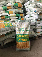 Семена кукурузы  Оржица (2019р.)  237 МВ/Насіння кукурудзи Оржиця