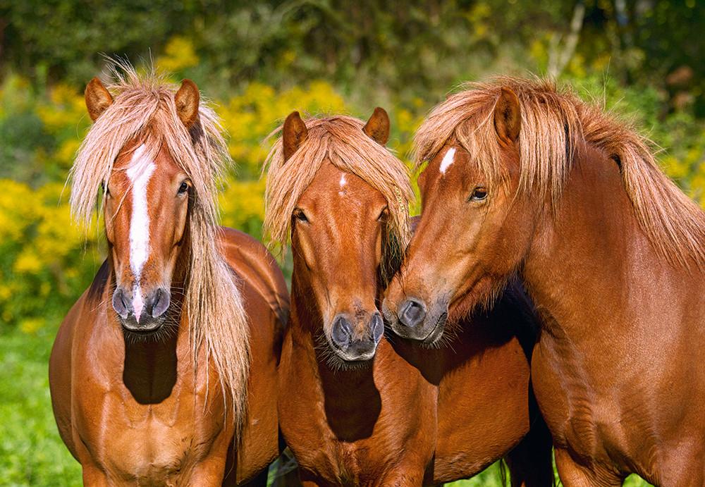 Пазлы Лошади на 1000 элементов