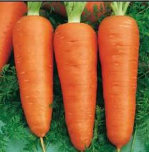 Морковь Кампино (каротин) Satimex Германия 2г